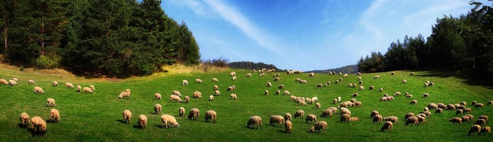 SHEPHERD STYLE