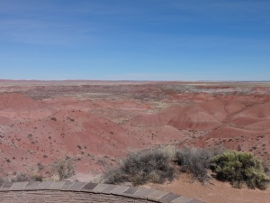 Drove through the Petrified Forest on our drive back to Phoenix