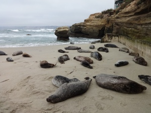 La Jolla Sea Lions. So close we could've touched them