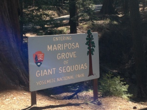 His beloved Grove of Sequoias