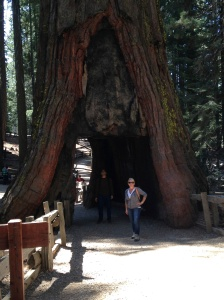 Me at the base of a Sequoia